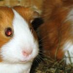 Animal shelter, breeder or pet shop?